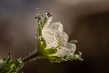 bloem met regendrup - AVG